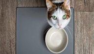 أفضل أكل للقطط: أغلبه يمكنك الحصول عليه بسهولة