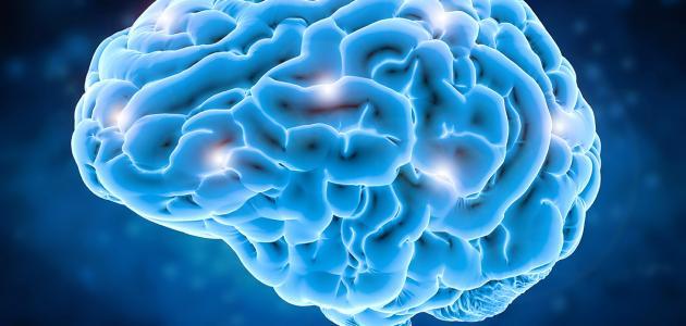 غذاء الدماغ الصحي
