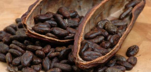 الكاكاو لمنع سرطان القولون