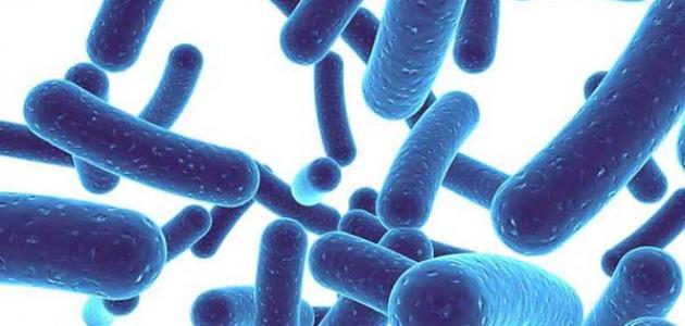 بروبيوتيك وعلاقته بالكوليسترول