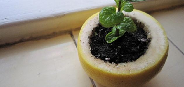 كيف يمكن إعادة إستخدام قشور الفواكة و الخضراوات؟