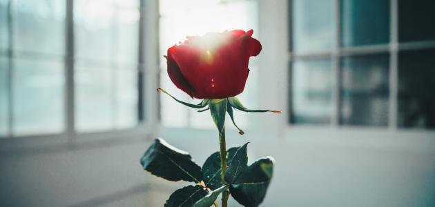 كيف يكون الاحتفال بعيد الحب حول العالم