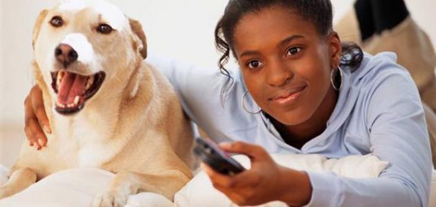 كيفية تربية الحيوانات الأليفة