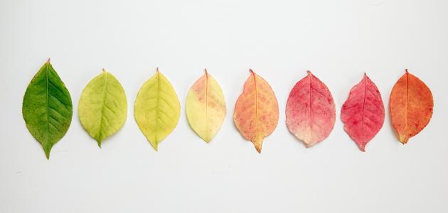 كيفية استخدام علاج الألوان في فقدان الوزن