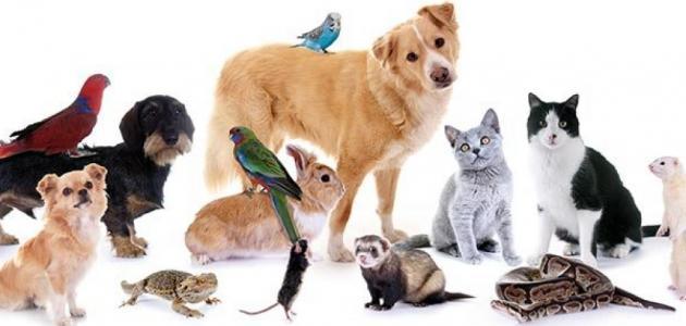 فوائد-تربية-الحيوانات-الأليفة/