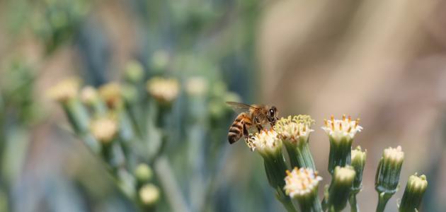 فوائد عسل النحل للأطفال والرضع