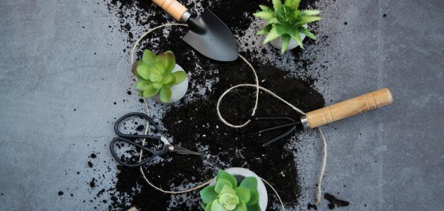 استخدامات متنوعة لنبات الألوفيرا