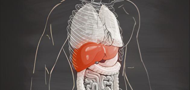 ما هو تضخم الكبد