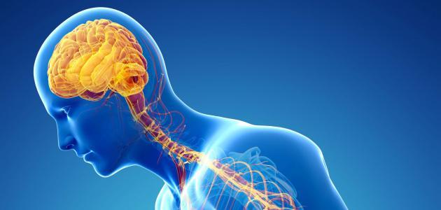 مشاكل الجهاز العصبي: أسبابها وعلاجها