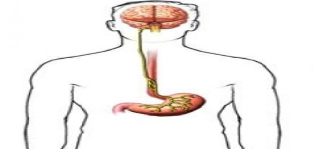 علاج العصب الحائر بالاعشاب