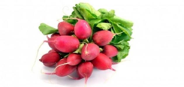 فوائد الفجل الأحمر للعقم