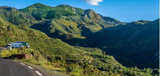 معلومات عامة عن غابة أطلس