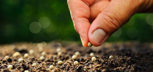 ما هي مكونات البذرة
