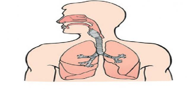 الجهاز التنفسي تعريفه ومكوناته