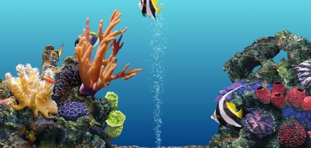 طريقة تنظيف حوض السمك