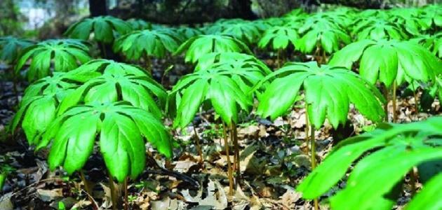 تتغذى النباتات اللاوعائية عن طريق البناء الضوئي كما في النباتات الوعائية