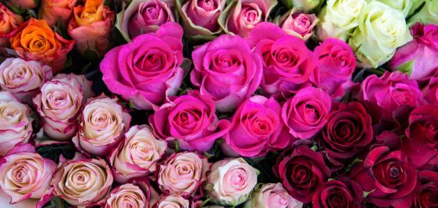 ما هي أسماء الورود