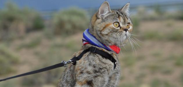 طرق تدريب القطط