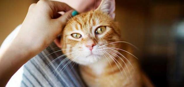 أعراض داء القطط