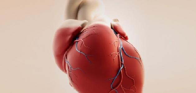 آلية عمل قلب الإنسان