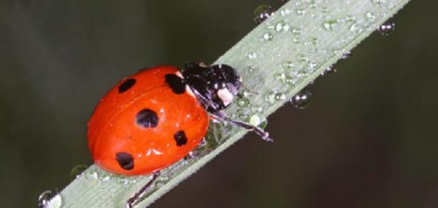 أنواع الحشرات النافعة