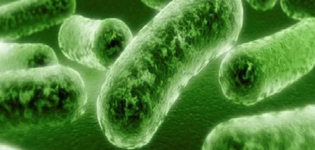 فوائد البكتيريا النافعة للإنسان