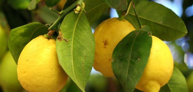 أضرار الليمون على الكلى