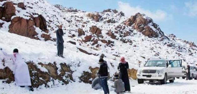 معلومات عن جبل اللوز
