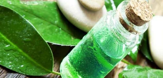 فوائد زيت الشاي الأخضر للشعر