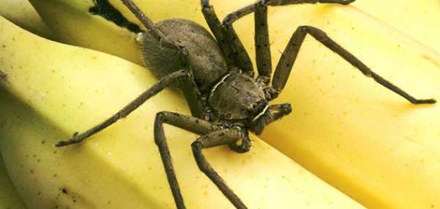 معلومات عن العنكبوت