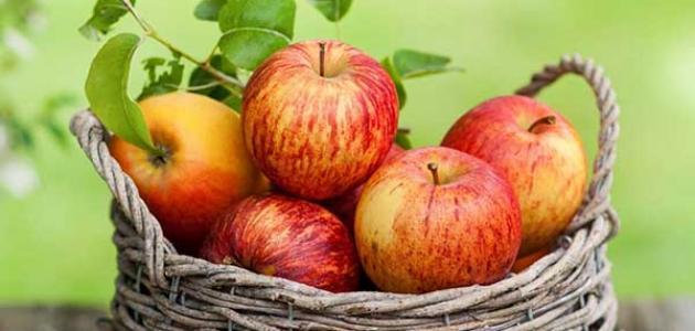 علاج المرارة بالتفاح