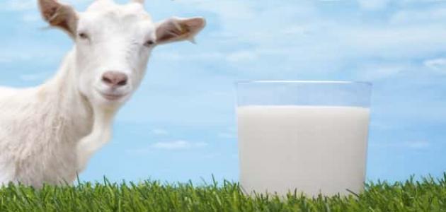 فوائد حليب الماعز لمرضى السكري