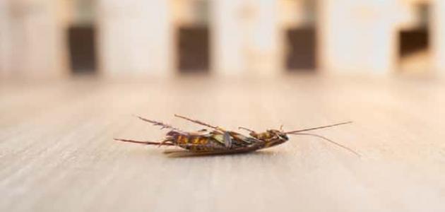 كيفية التخلص من الصراصير بالخل