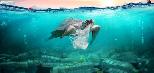 أسباب تلوث المياه