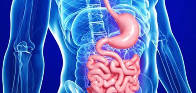 مكونات الجهاز الهضمي