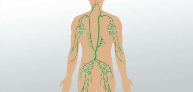 ما هي الأوعية اللمفاوية