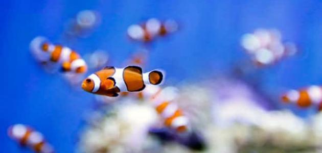 معلومات عن أسماك الزينة
