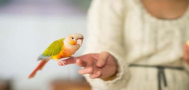 معلومات عن طيور الزينة
