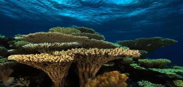 أضرار الشعاب المرجانية