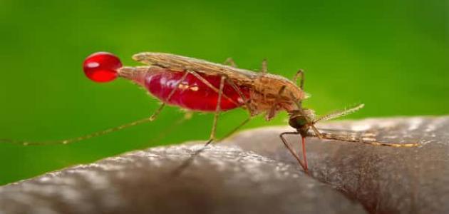 أسباب مرض الملاريا
