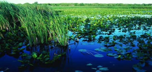 ما هو التوازن البيئي
