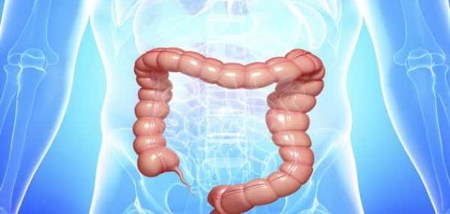 أهمية الأمعاء الغليظة في جسم الإنسان