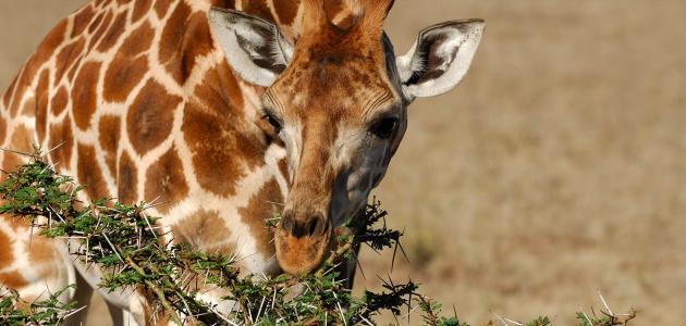 معلومات عن التكيف عند الحيوانات