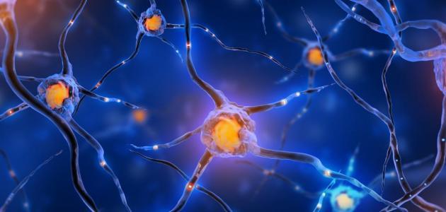 طرق علاج ضعف الأعصاب