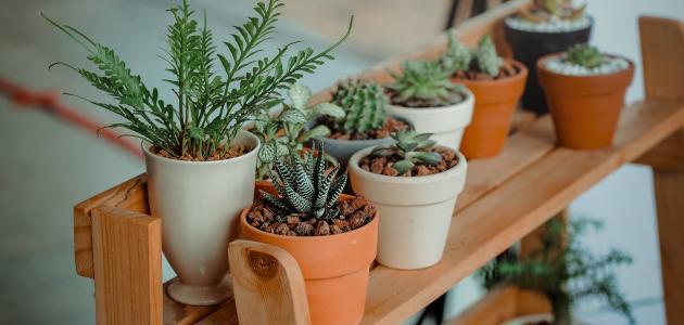 طرق-العناية-بالنباتات-المنزلية/