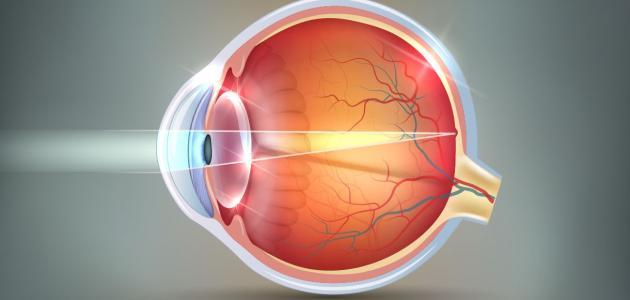 معلومات عن قرنية العين