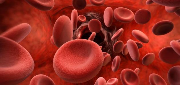 معلومات عن تميع الدم