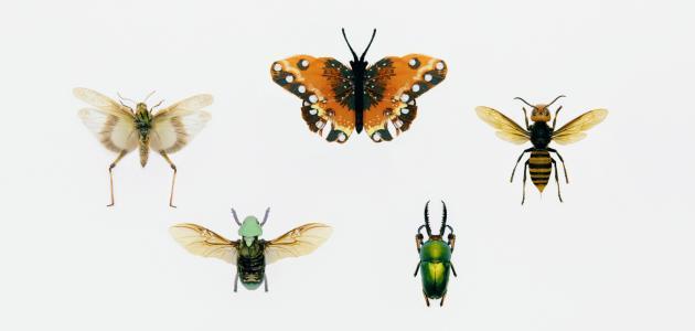 طرق مكافحة حشرات المنزل