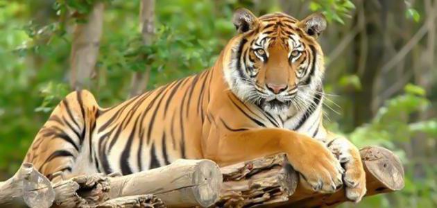 أبرز الحيوانات المتوحشة