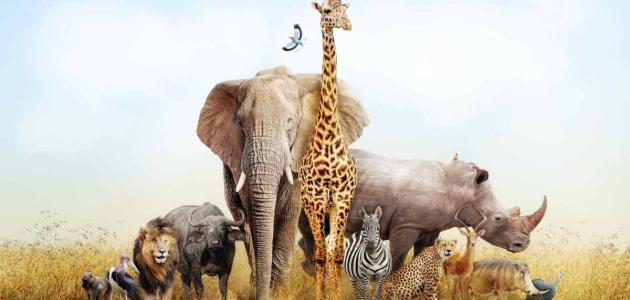 معلومات عن الحيوانات البرية